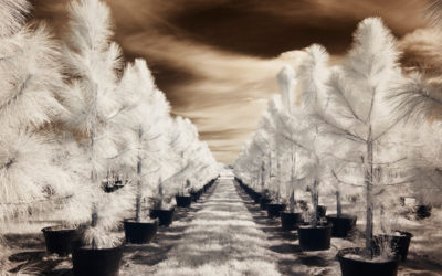 Infrared digital photography with permanently modified DSLR's