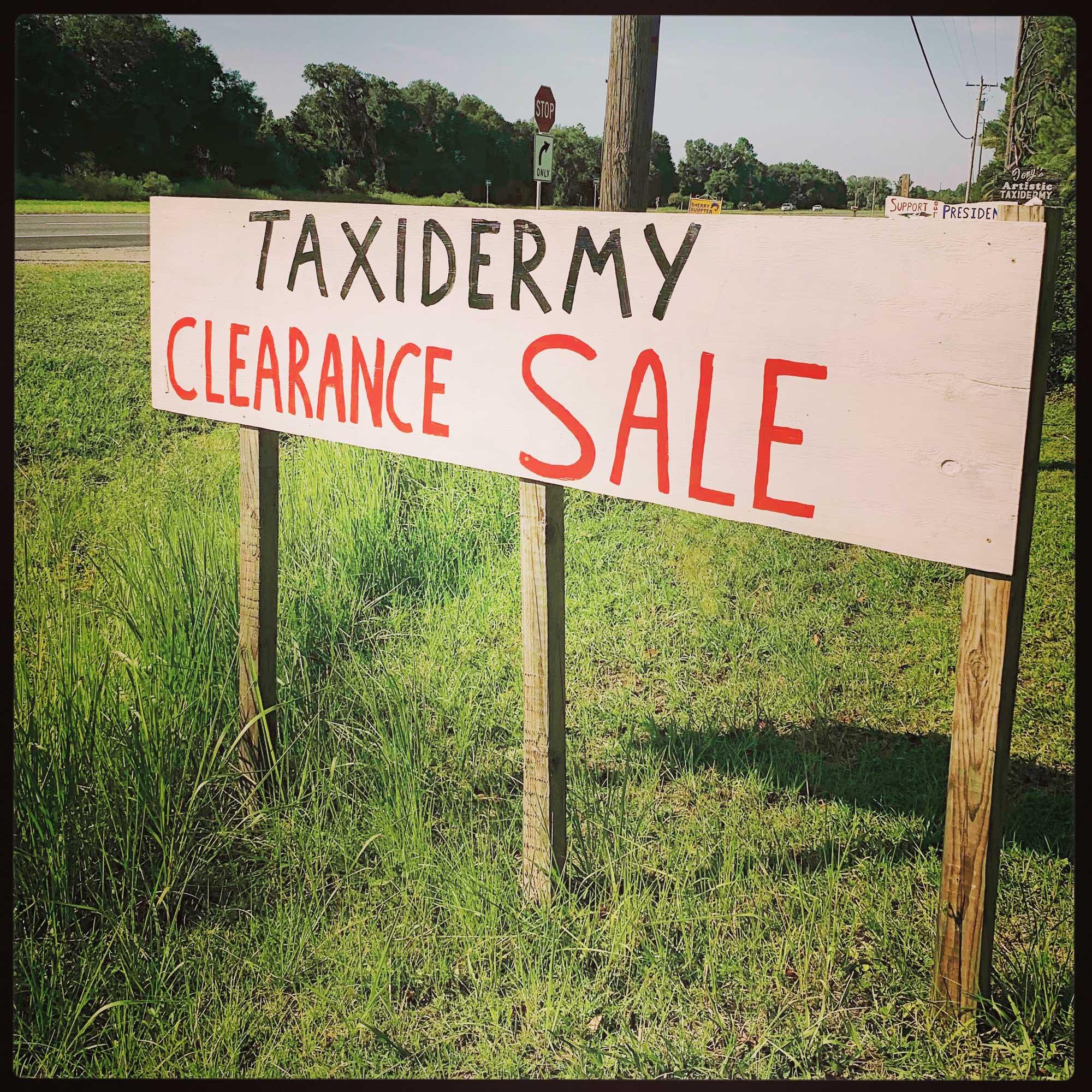 Taxidermy Sale