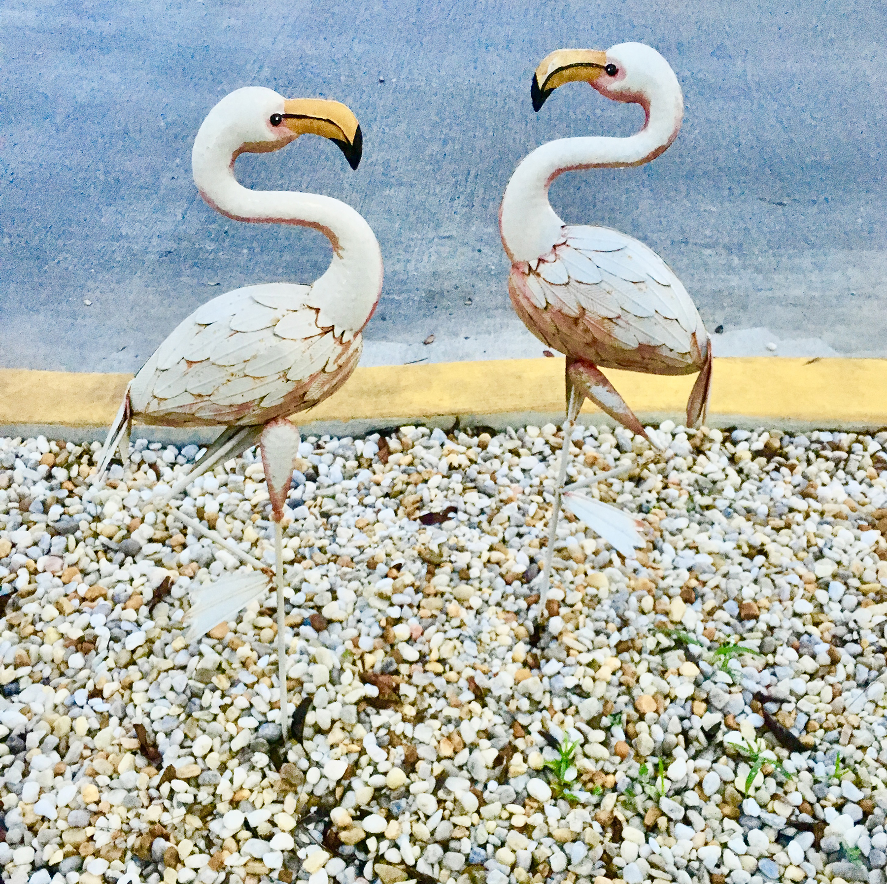 Carwash-flamingo-standoff_Wesley-Chapel
