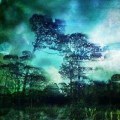 Tree-Series-Quiet-Conversation
