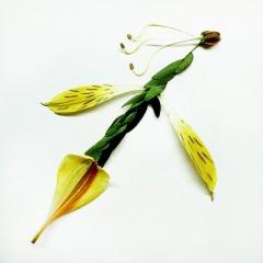 "Yellow Petal Archaeopteryx: 10"" x 10"""