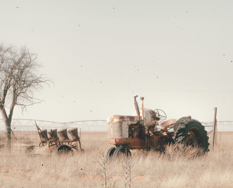 """Out to Pasture: 15"""" x 10"""""""
